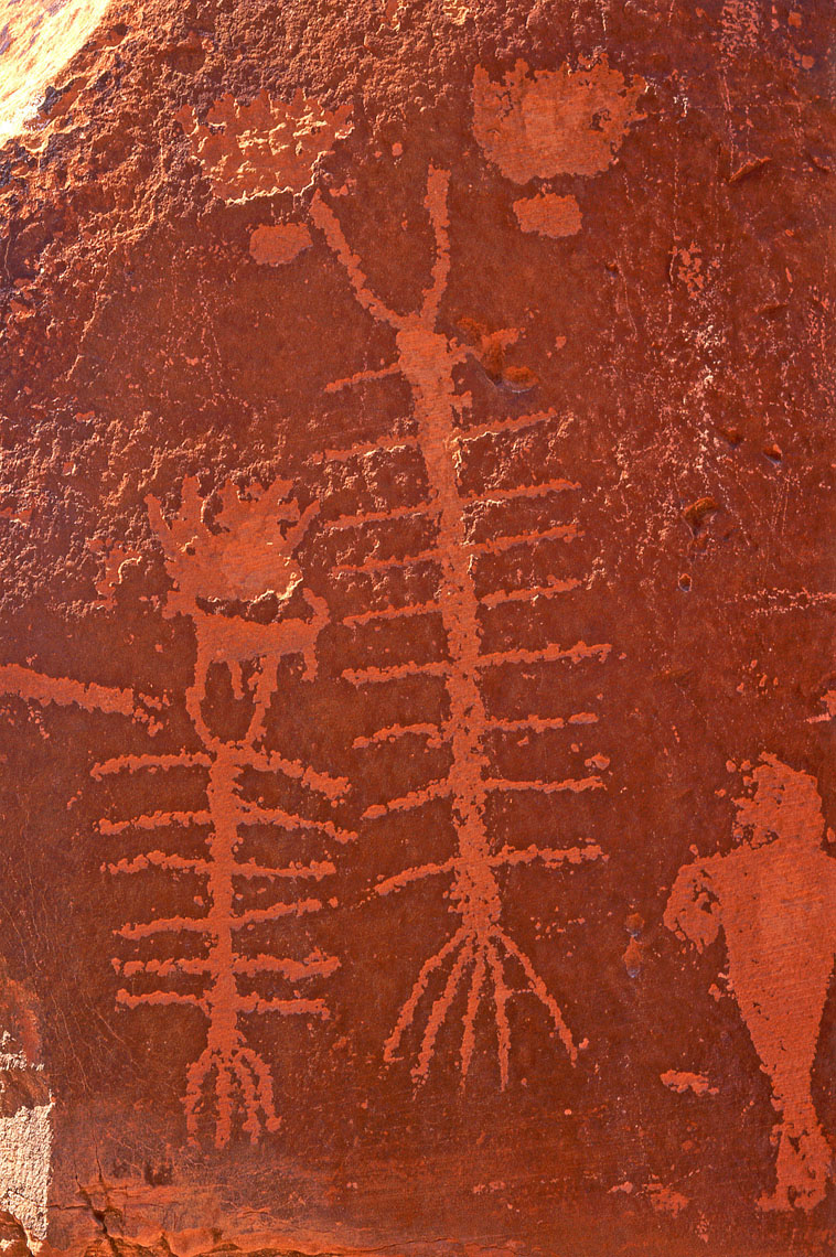 Centipede petroglyphs, John Annerino, Kings Bottom, Colorado River, UT, Fremont-Anasazi